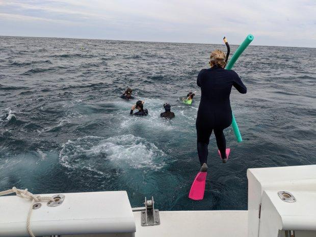Snorkeling Ningaloo Reef