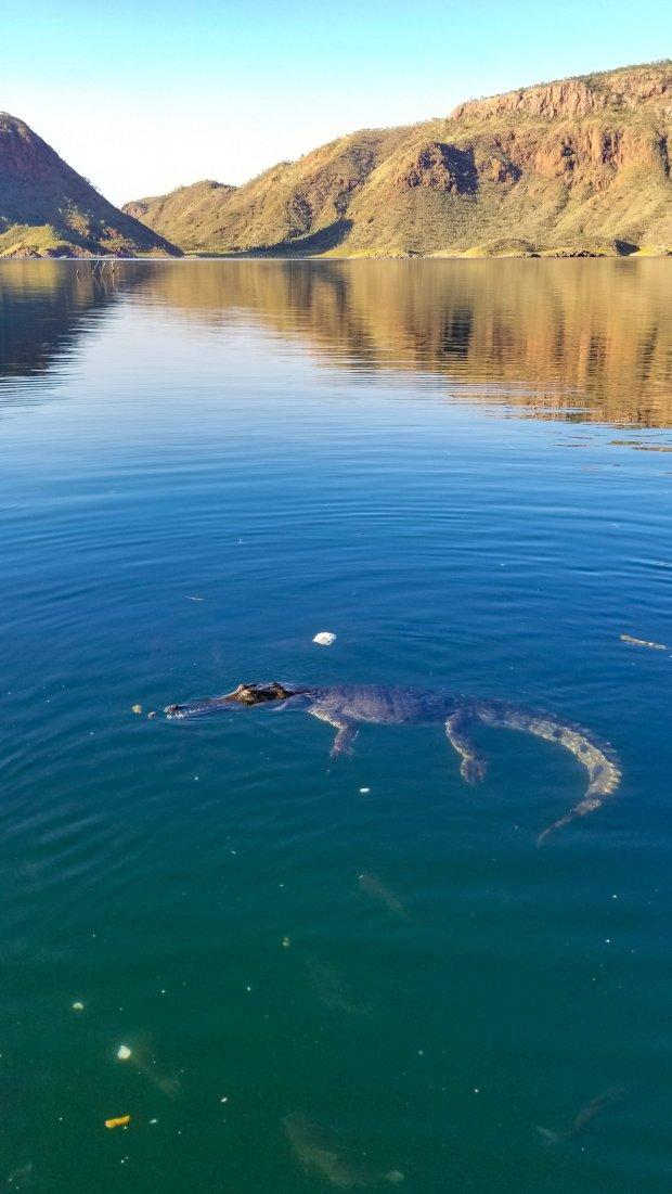 Lake Argyle Fresh Water Crocodile