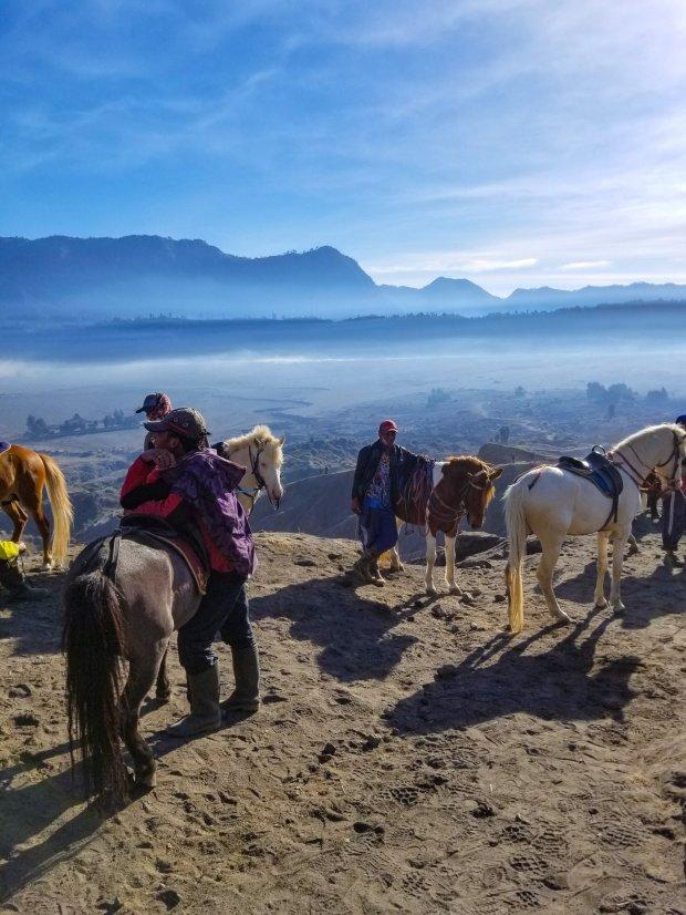 Horses on Mount Bromo