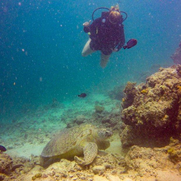 Sea turtle mabul