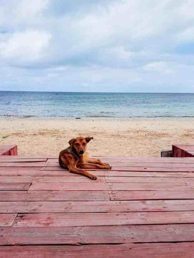 Ifaty Madagascar beach dog
