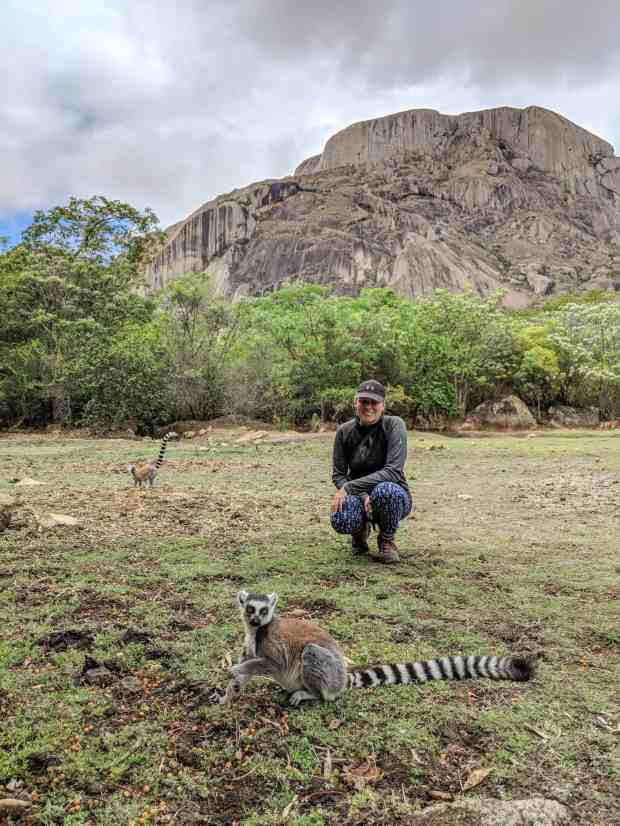 RIngtail lemurs at Anja Community Reserve Madagascar