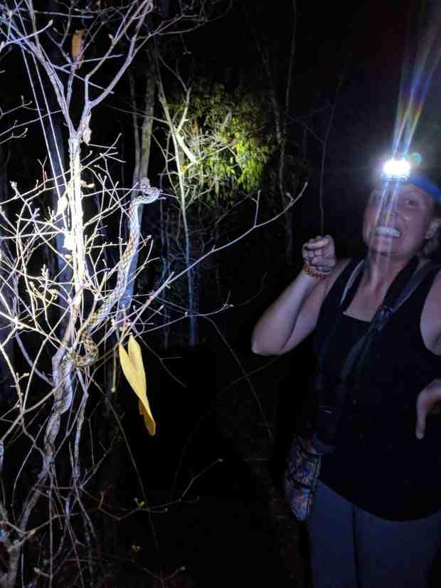 Kirindy Forest snake Madagascar