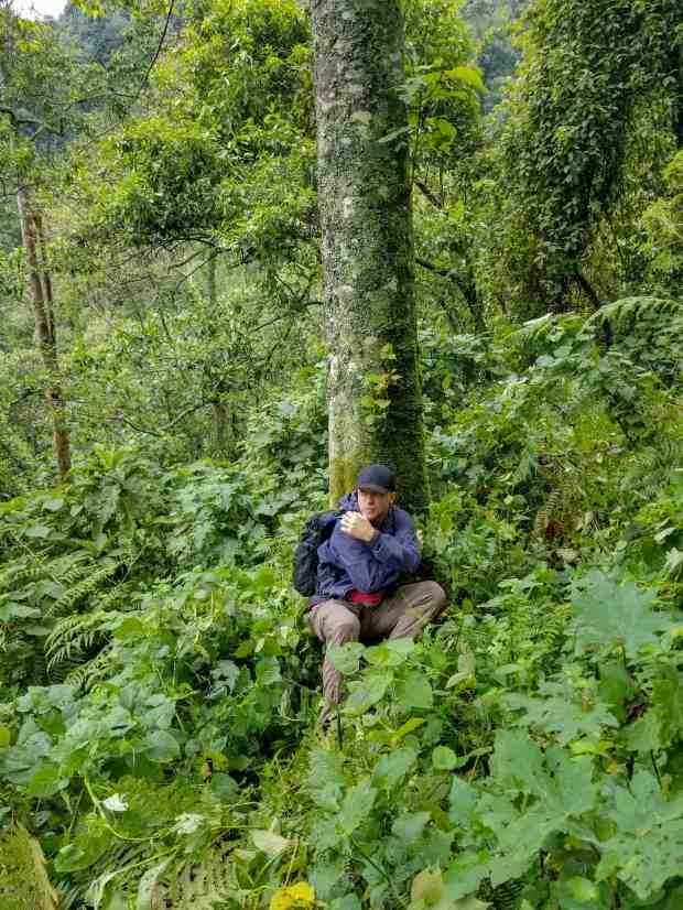 Gorilla trekking in Bwindi Impenetrable Forest in Uganda