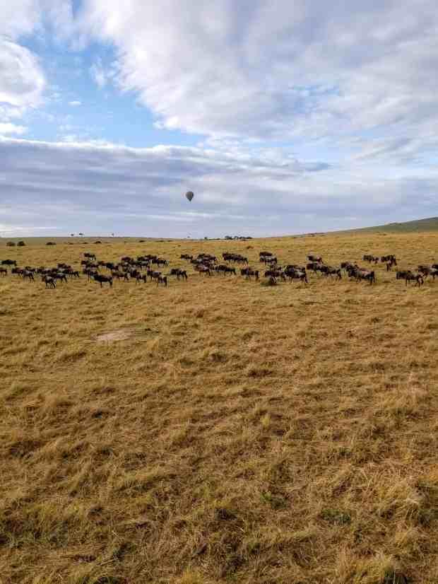 Great migration Masai Mara National Reserve in Kenya hot air balloon safari