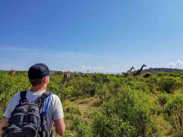 Giraffes at Crater Lake reserve Naivasha Kenya