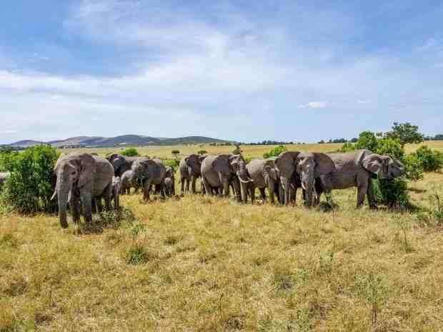 Elephants in the