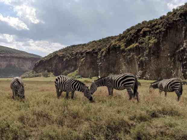 Zebras in Hell's Gate National Park Kenya