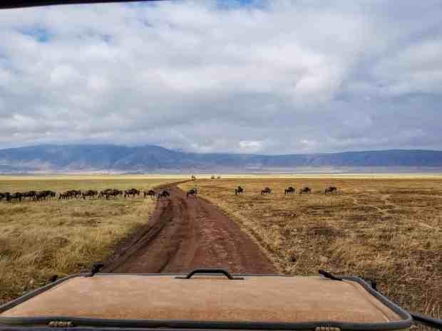 Wildebeest Ngorongoro Crater Tanzania