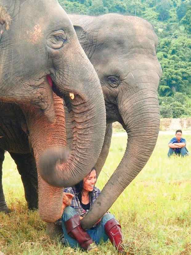 Lek elephant nature park Chiang Mai Thailand