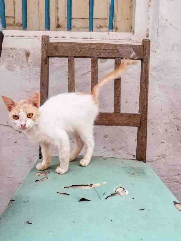 Kittens of Stone Town Zanzibar Tanzania