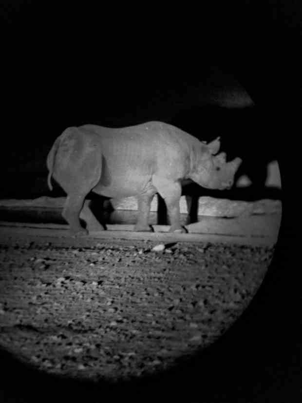 Rhino drinking at water hole Etosha National Park Namibia