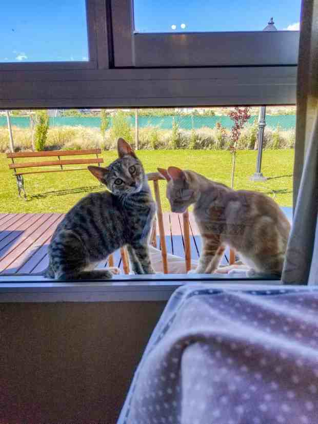 Two kittens in a window in El Calafate, Argentina Patagonia
