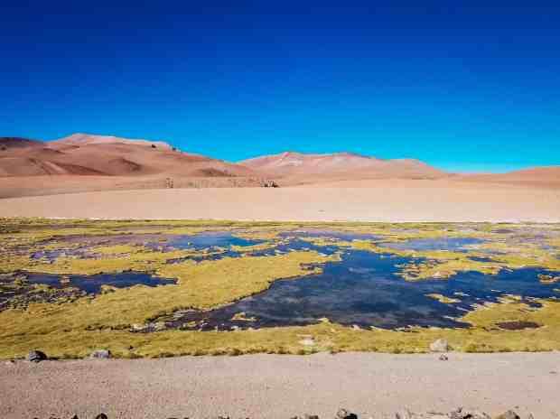 Quepiaco Wetlands San Pedro de Atacama